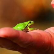 Z księcia w żabę, czyli o tym, jak mężczyźni zmieniają się po ślubie