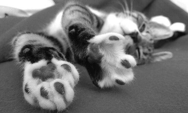 Felinoterapia czyli leczenie z kotem