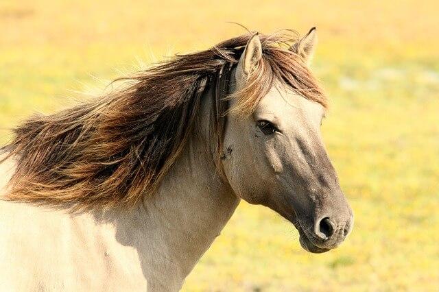 Terapia z wykorzystaniem koni