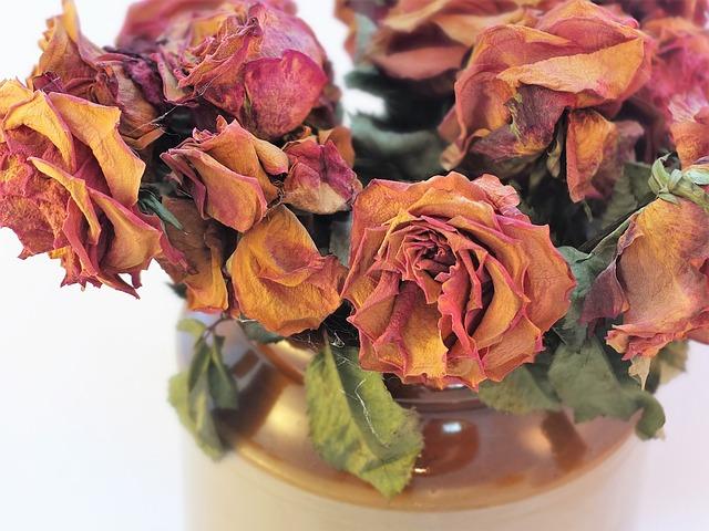 Suszone róże w wazoniku