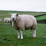 Czy terapia ze zwierzętami może być skuteczna?